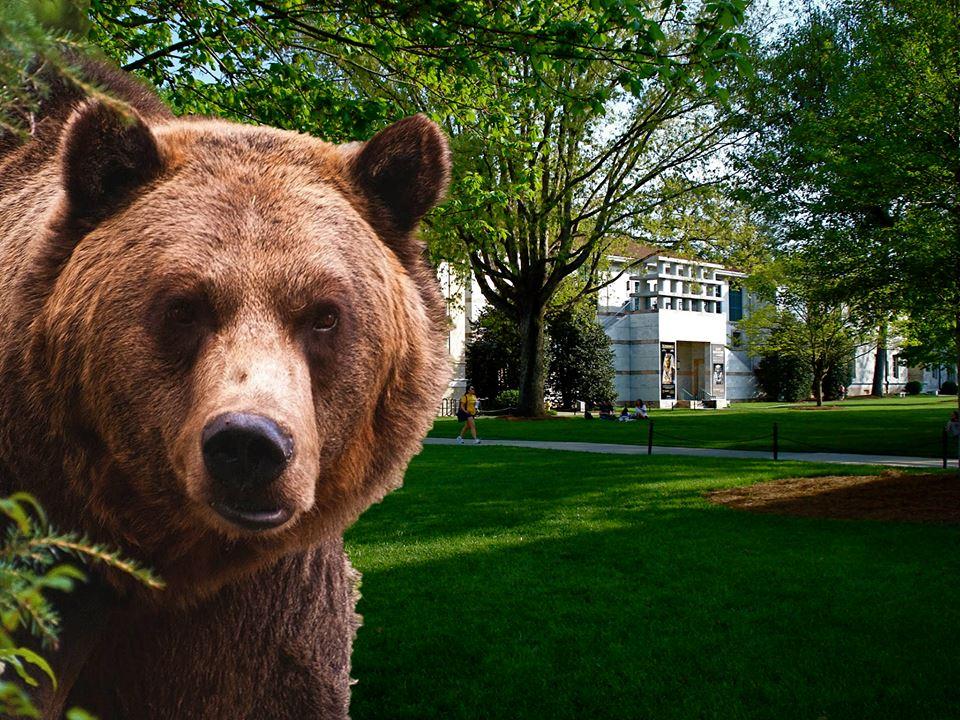 bear sleuth