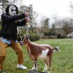 Goat Death Count Escalates as Formal Recruitment Ends: