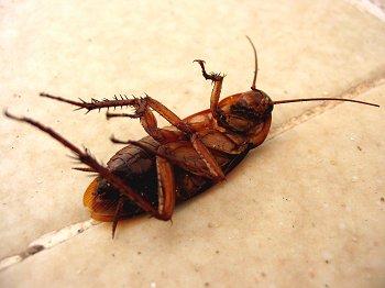 roaches-austin-tx-4